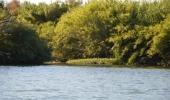 Neprostumny porost kolem reky