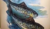 rucne-malovany-salek-na-kavu-s-rybou-pro-rybare-original (3)