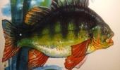 rucne-malovany-salek-na-kavu-s-rybou-pro-rybare-original (4)