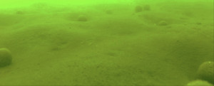 boilies-pod-vodou