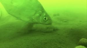 cejn-pod-vodou