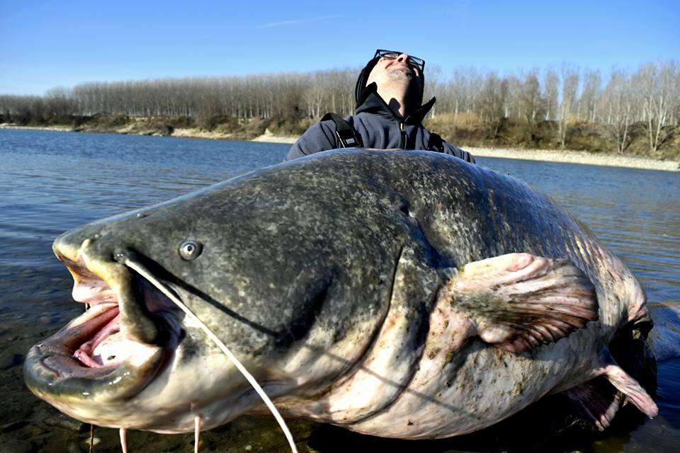 Trofejní sumec z Itálie: Rybář chytil sumce o váze 106,5 kilogramů ...