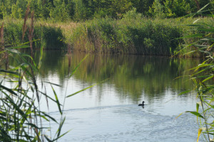 jezero_za_pilou_ryby