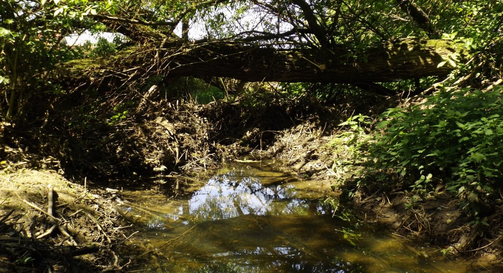 potok_strom